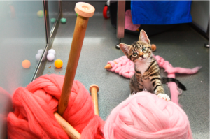 Micro-volunteering: ­­­Learn to loom knit PURRfect Toys for Rescue Cats in 2 Hours